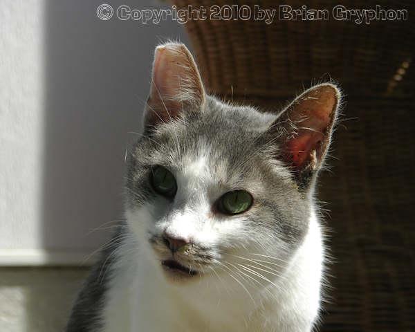 at Cat Welfare Association