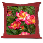 Suede Pillow; rosa 'Rainbow Sorbet'